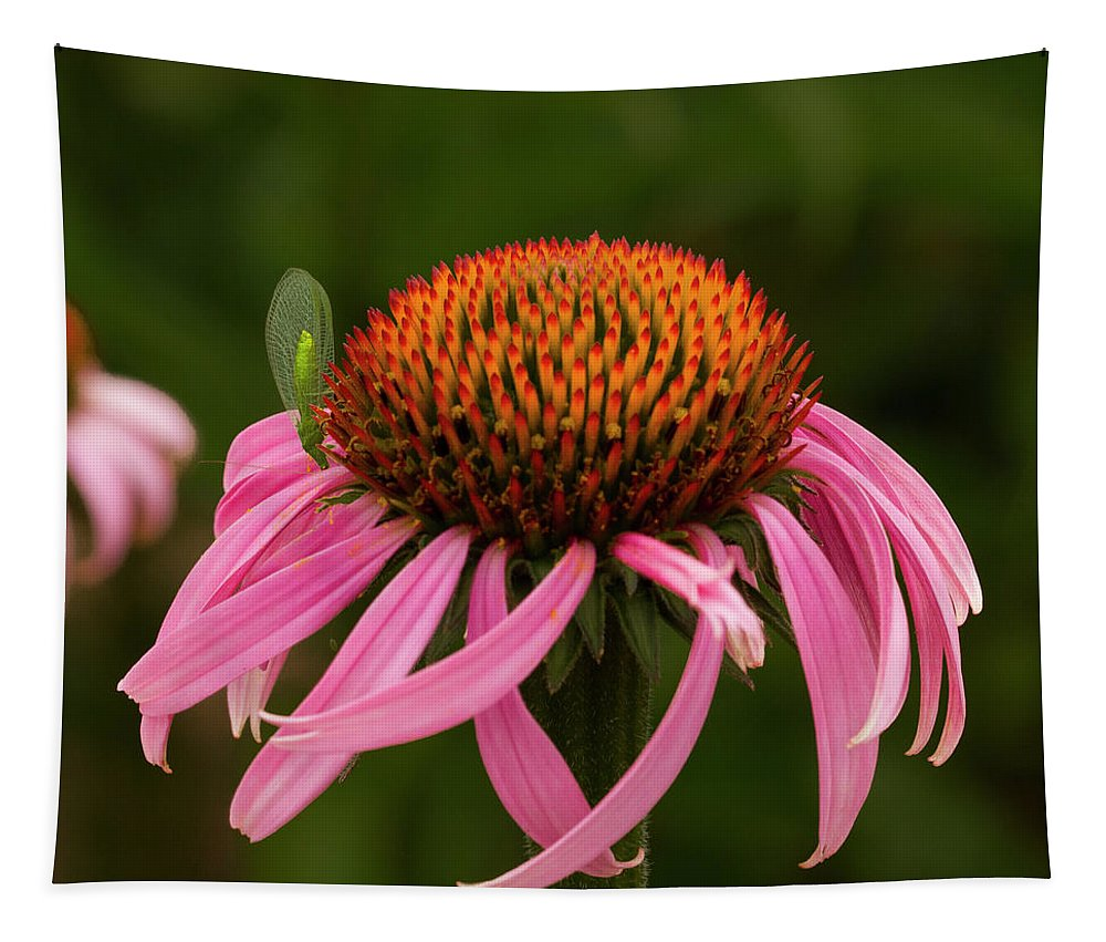 Jean Noren Tapestry featuring the photograph Lacewing On Echinacea Blossom by Jean Noren
