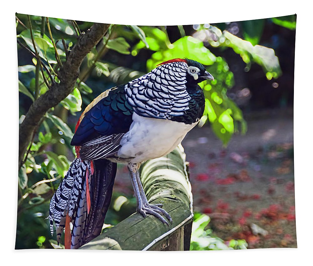 Lady-amherst's-pheasant Tapestry featuring the photograph Lady Amherst's Pheasant by Susie Peek
