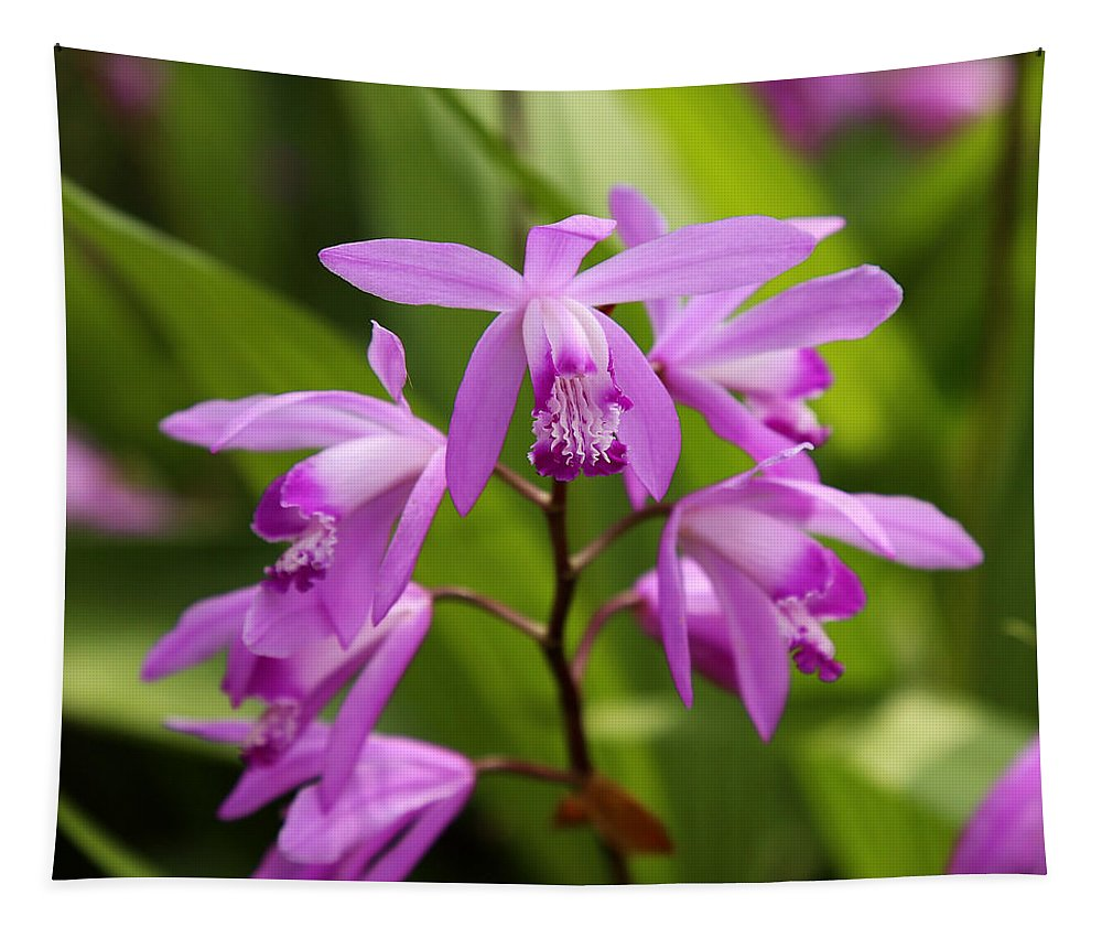 Orchid Tapestry featuring the photograph Lavender Orchid by Judy Vincent