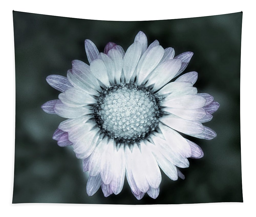 Lawn Tapestry featuring the photograph Lawn Daisy - Toned by Susie Peek
