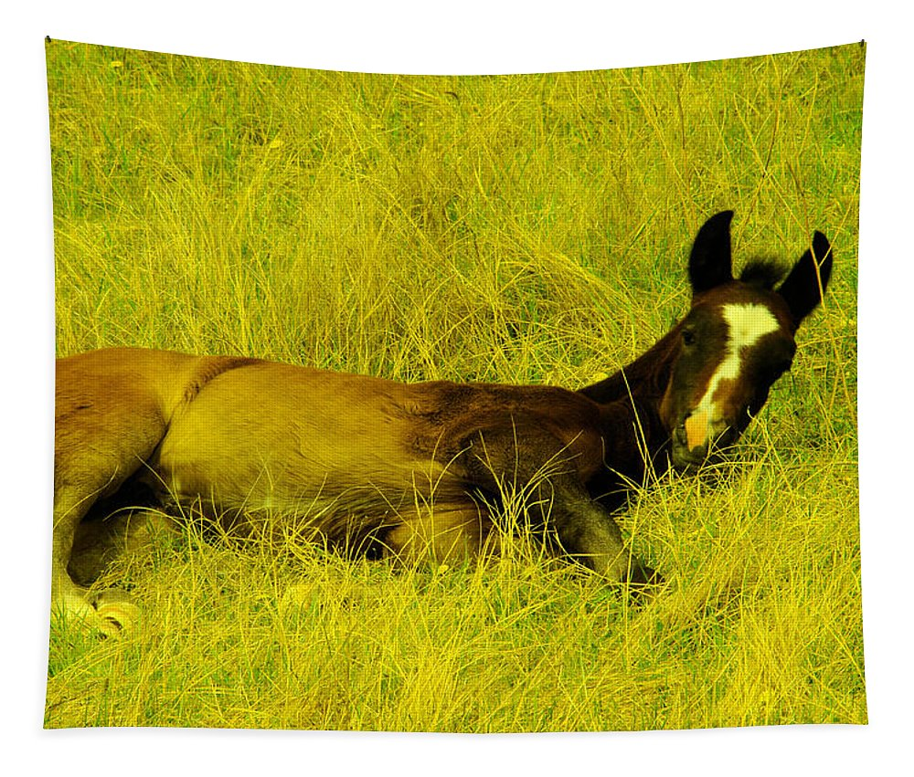 Colt Tapestry featuring the photograph Lazy Colt by Jeff Swan
