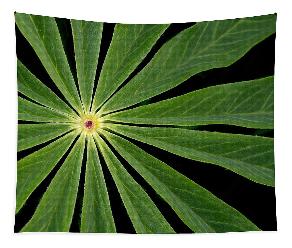 Jean Noren Tapestry featuring the photograph Leaf Pattern by Jean Noren
