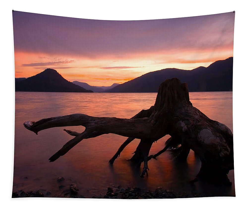 Stump Tapestry featuring the photograph Left Behind by Mike Dawson
