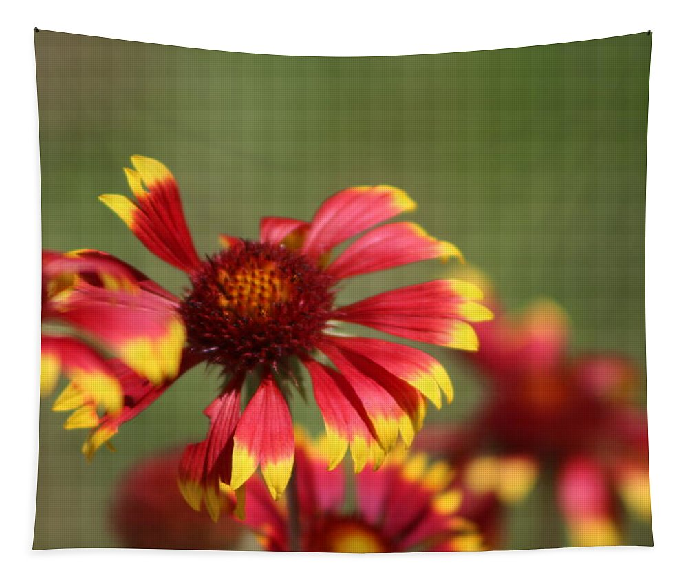 Coneflower Tapestry featuring the photograph Lemon Yellow and Candy Apple Red Coneflower by Colleen Cornelius
