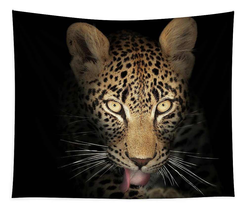 Leopard Tapestry featuring the photograph Leopard In The Dark by Johan Swanepoel