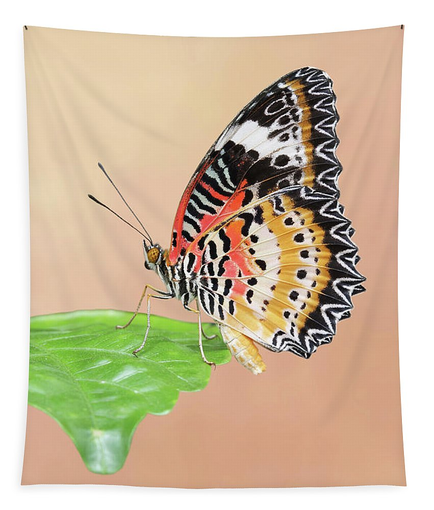 Butterfly Tapestry featuring the photograph Leopard Lacewing Butterfly #2 V2 by Judy Whitton
