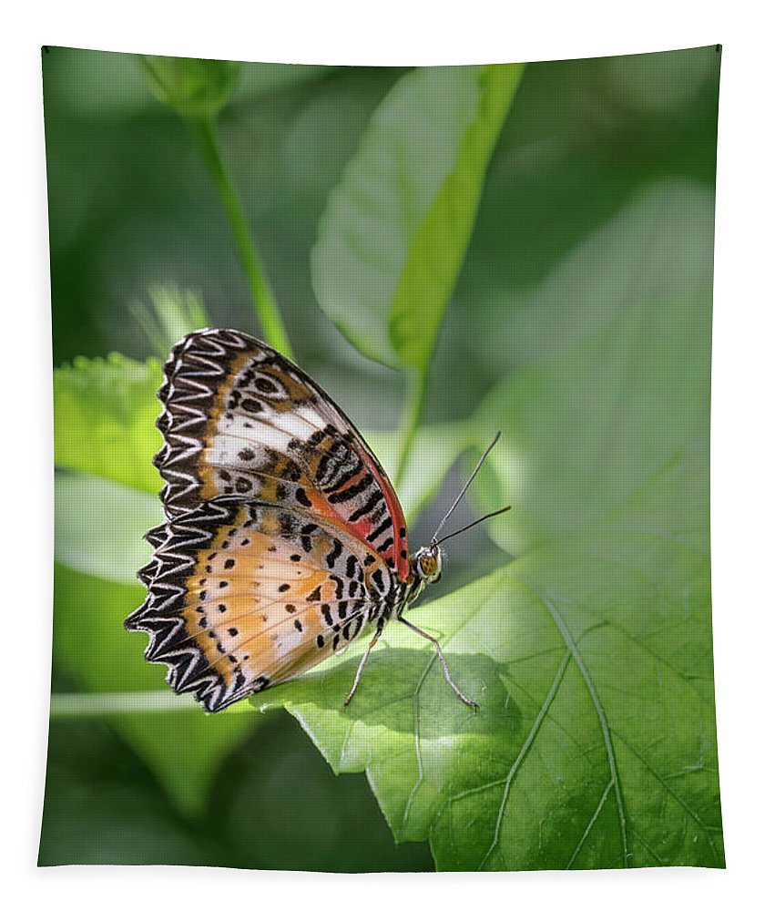 Leopard Lacewing Tapestry featuring the photograph Leopard Lacewing by Elisabeth Lucas
