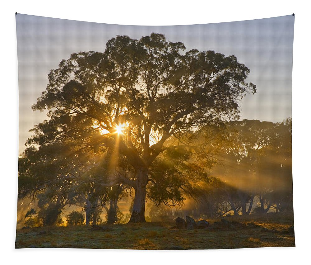 Tree Tapestry featuring the photograph Let There Be Light by Mike Dawson