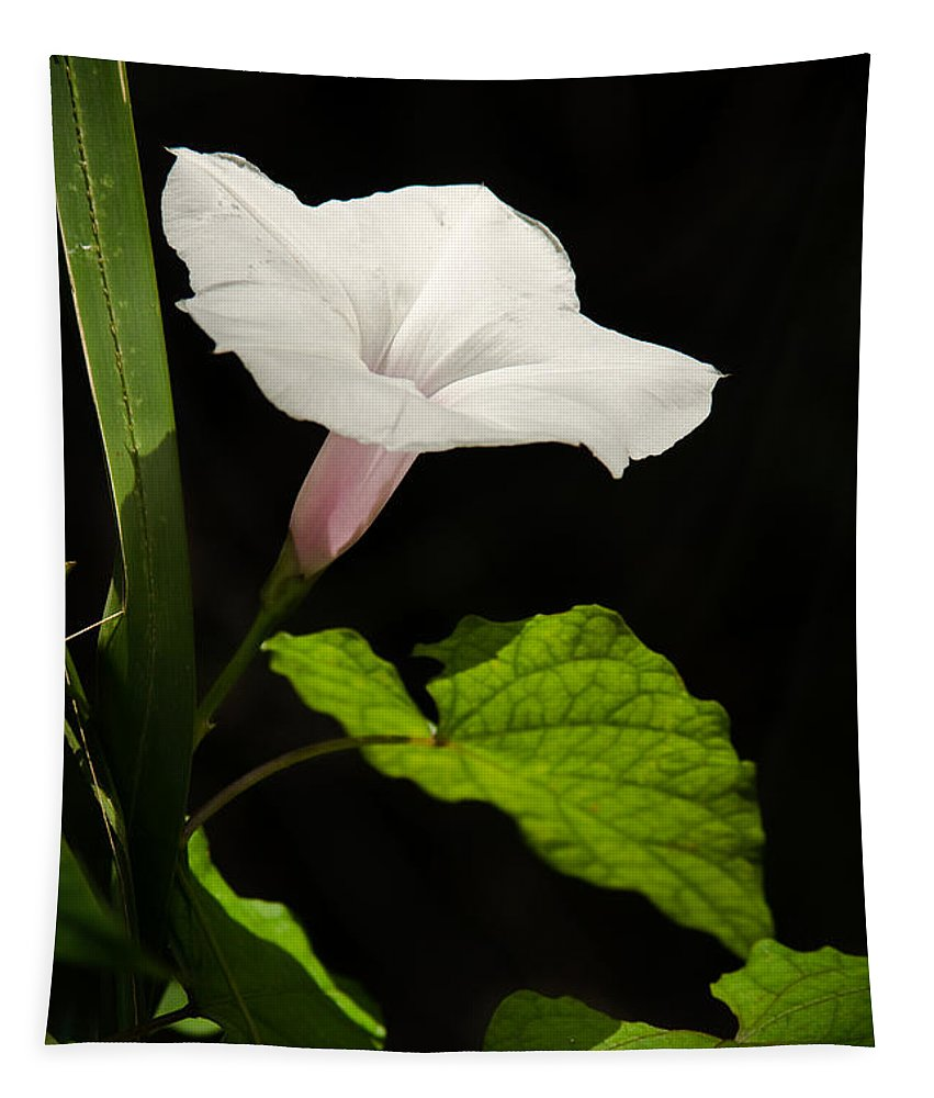 Flower Tapestry featuring the photograph Light Out Of The Dark by Christopher Holmes