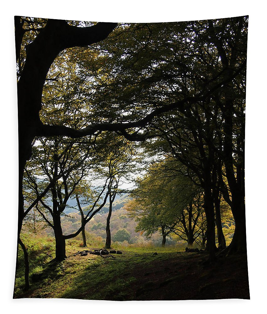 Trees Tapestry featuring the photograph Light Through Woodland Darkness by Philip Openshaw