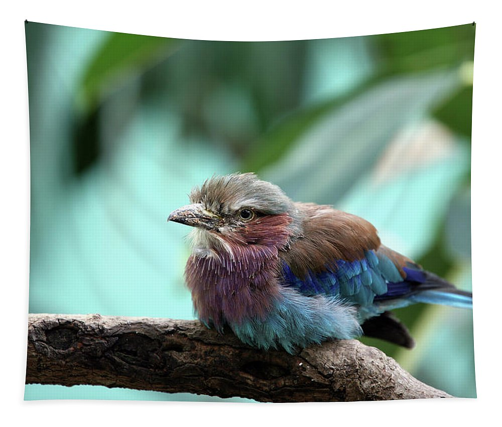 Bird Tapestry featuring the photograph Lilac Breasted Roller by Karol Livote