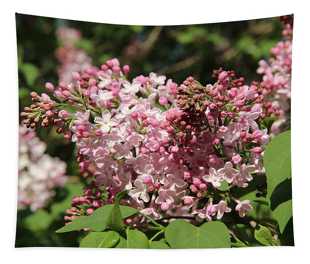 Lilac Pink Poster Tapestry featuring the photograph Lilac Pink by Sergey Lukashin