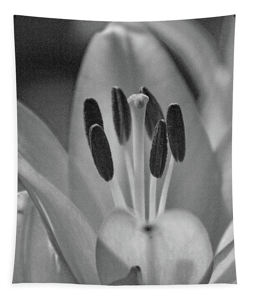 Lily Tapestry featuring the photograph Lily - American Cheerleader 11 - Bw - Water Paper by Pamela Critchlow