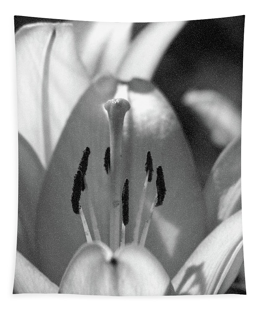 Lily Tapestry featuring the photograph Lily - American Cheerleader 18 - Bw - Water Paper by Pamela Critchlow