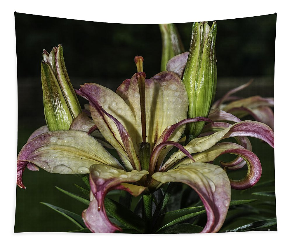 Red And Yellow Lily Tapestry featuring the photograph Lily In The Rain by Steve Purnell