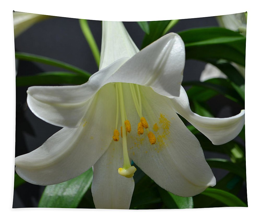 Lily Tapestry featuring the photograph Lily by James Pinkerton