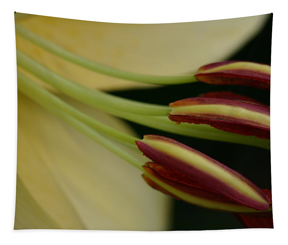 Lily Tapestry featuring the photograph Lily by Michael Munster