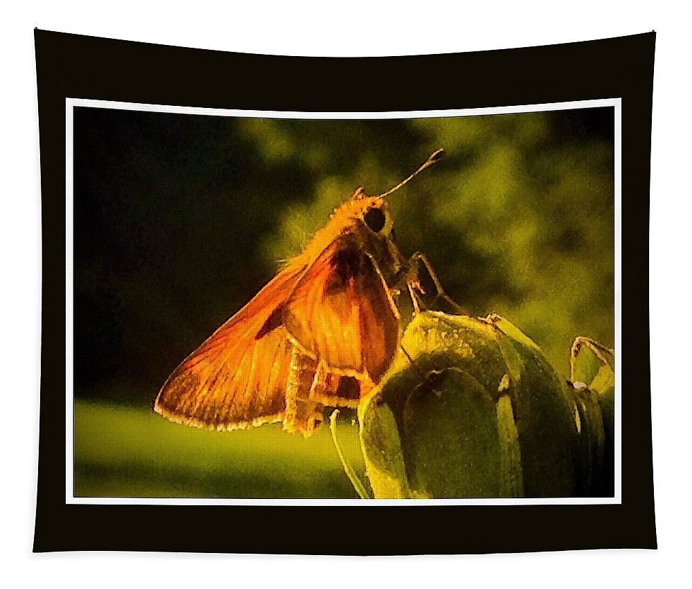 Skipper Tapestry featuring the photograph Little Brown Skipper Butterfly by Debra Lynch