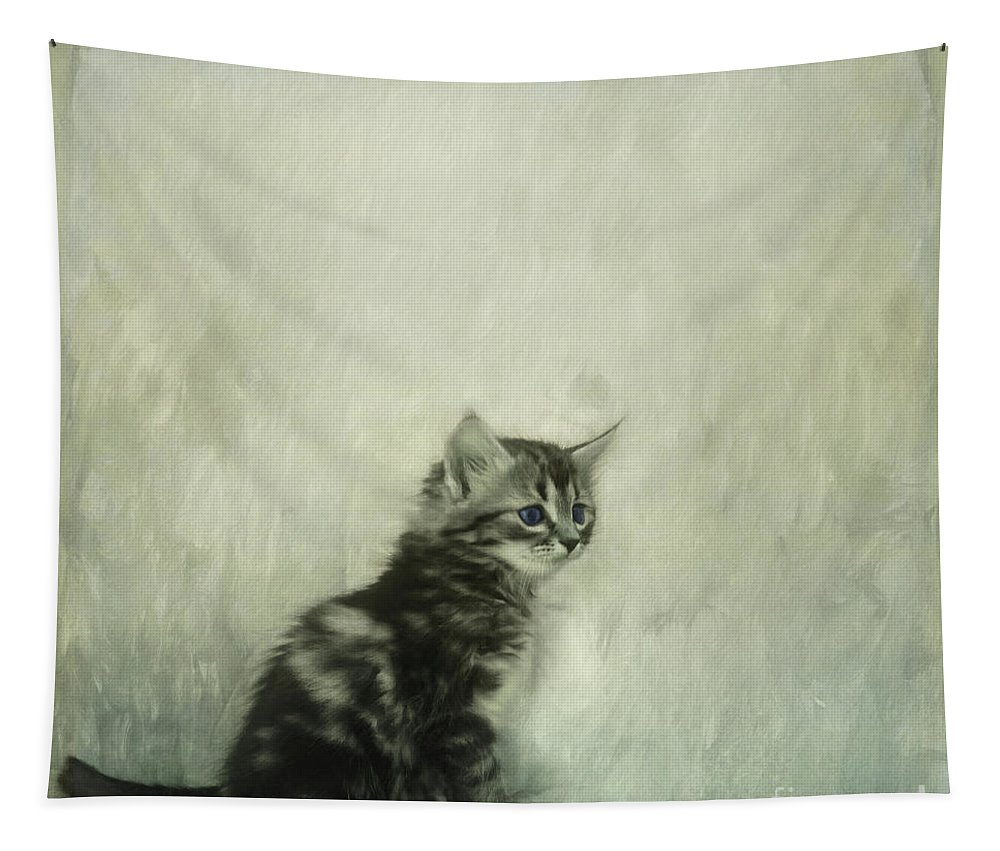 Cats Tapestry featuring the photograph Little Kitty by Priska Wettstein