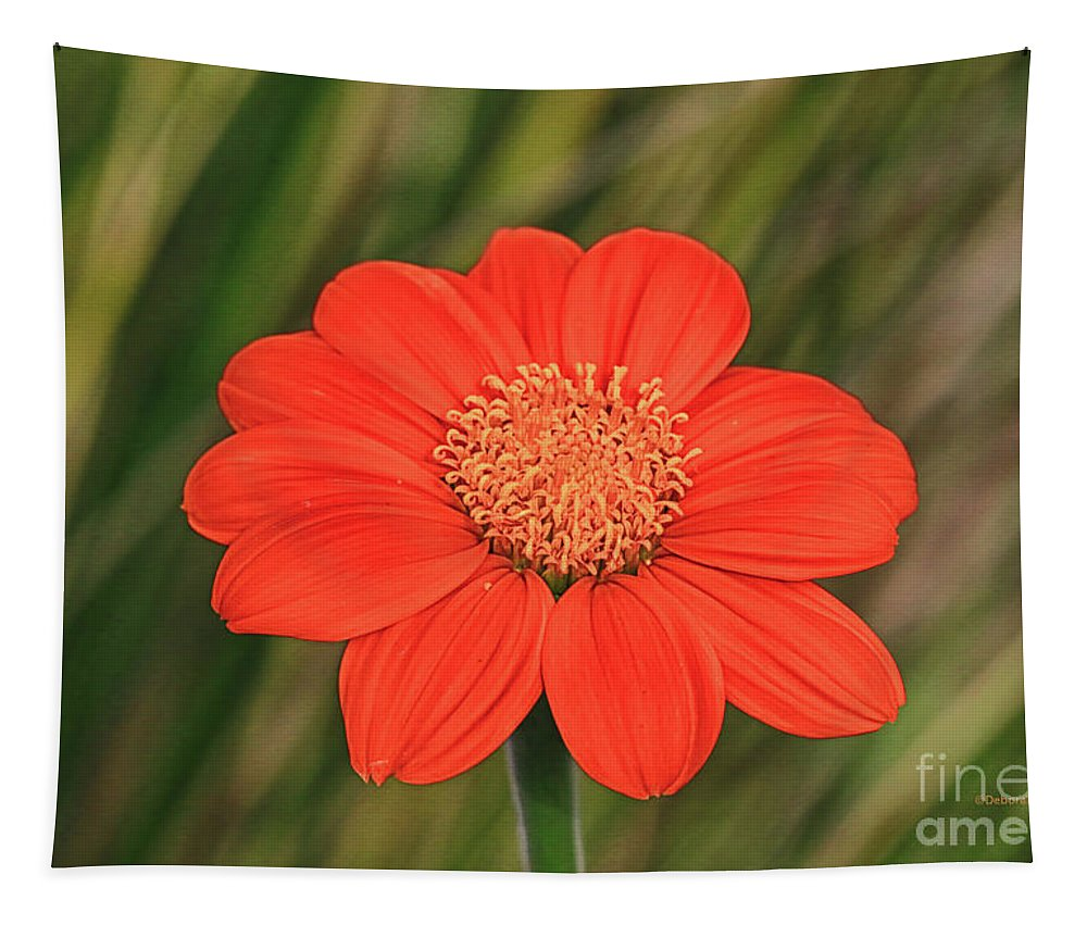 Flower Tapestry featuring the photograph Little Orange Beauty by Deborah Benoit