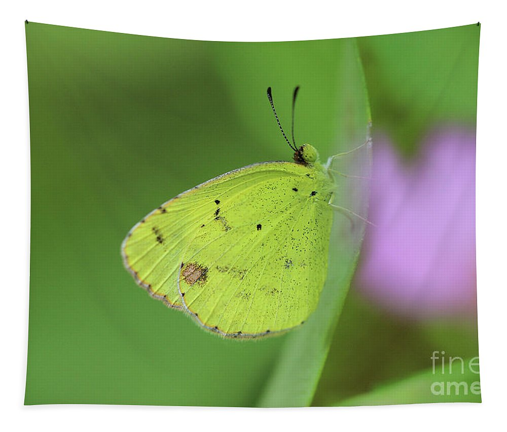 Little Yellow Tapestry featuring the photograph Little Yellow Butterfly Close-up by Karen Adams