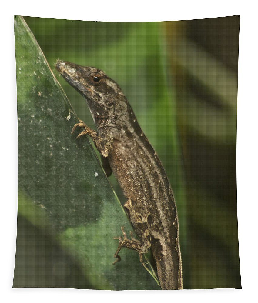 Wildlife Tapestry featuring the photograph Lizard 3 by Michael Peychich