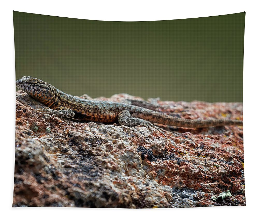 Lizard Tapestry featuring the photograph Lizard On A Rock by Belinda Greb