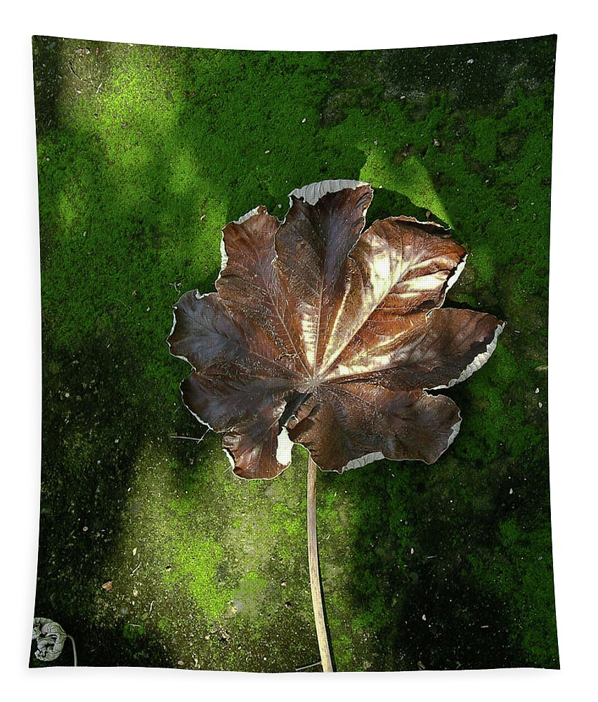 Lonely Tapestry featuring the photograph Lonely Leaf On Moss by Douglas Barnett