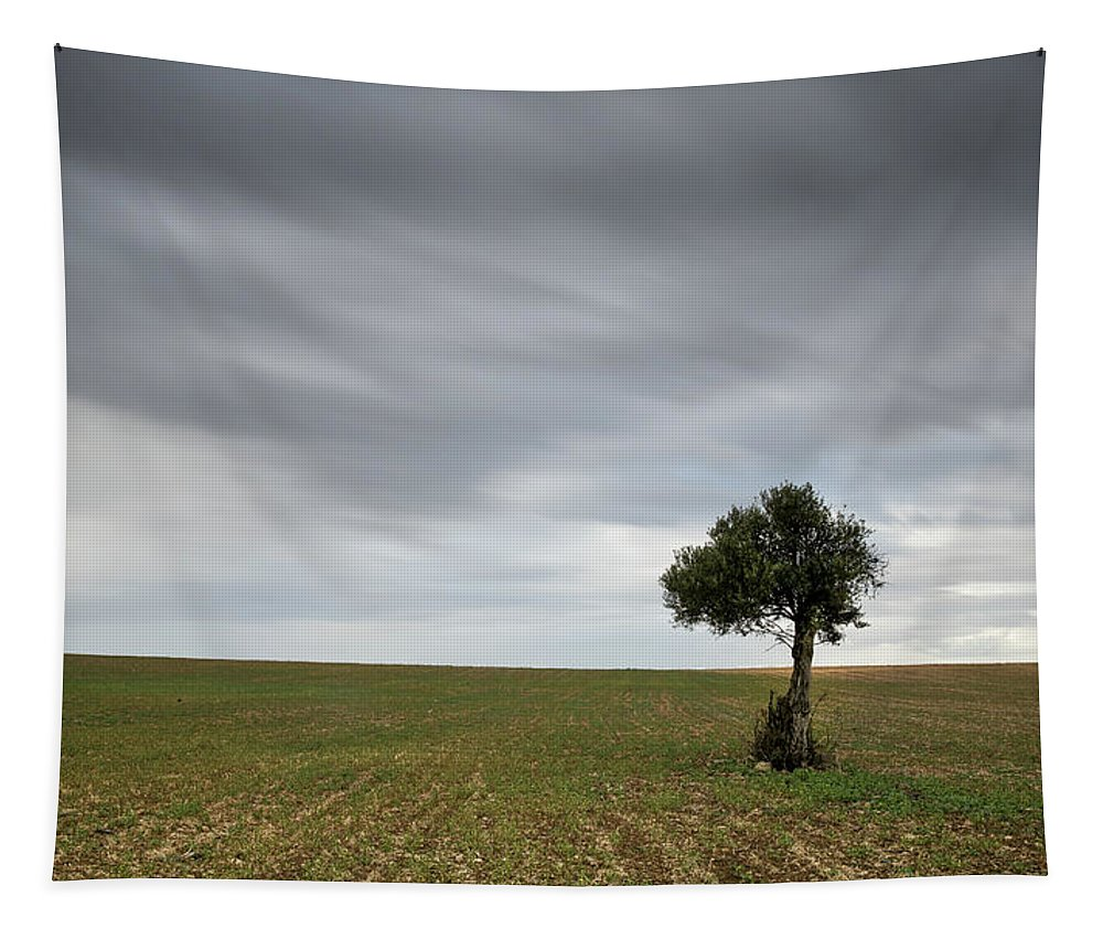 Olive Tree Tapestry featuring the photograph Lonely Olive Tree With Moving Clouds by Michalakis Ppalis