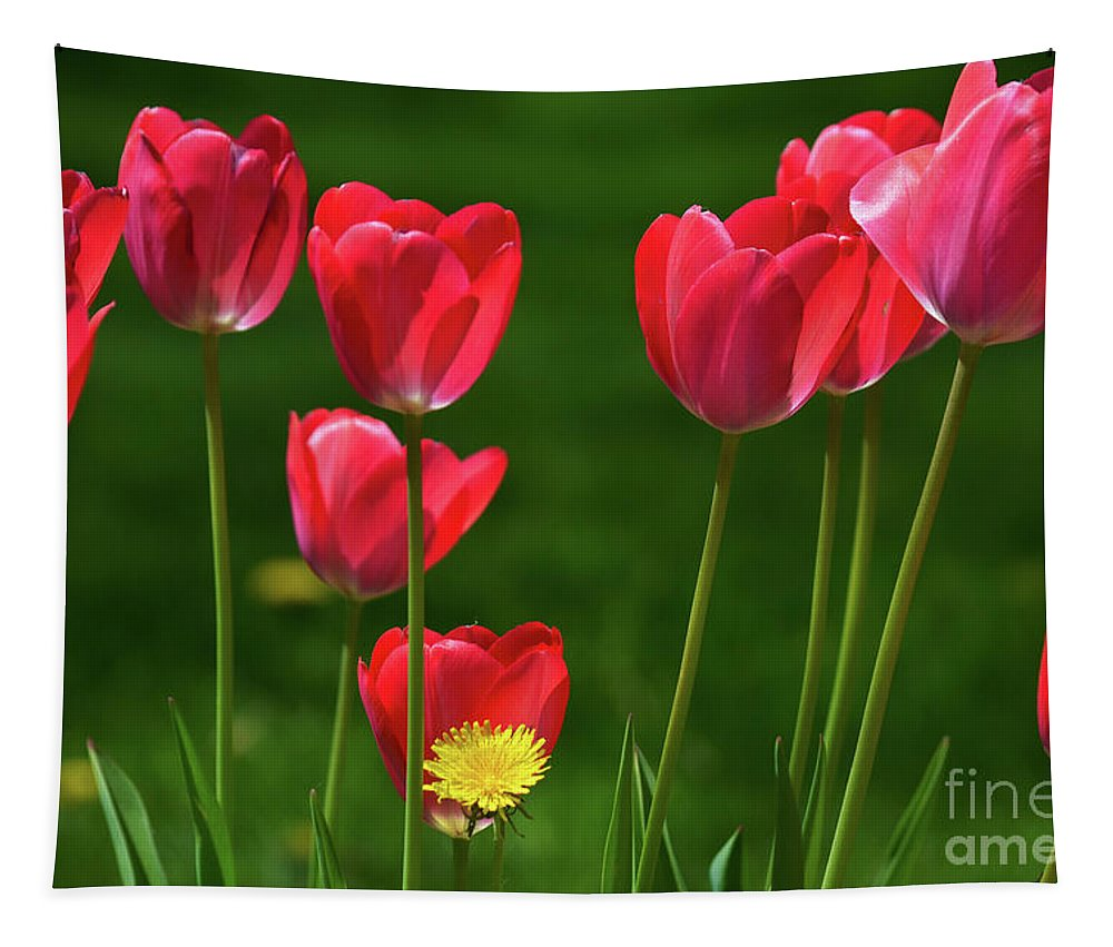Pink Tulips Tapestry featuring the photograph Lonesome by Deb Halloran