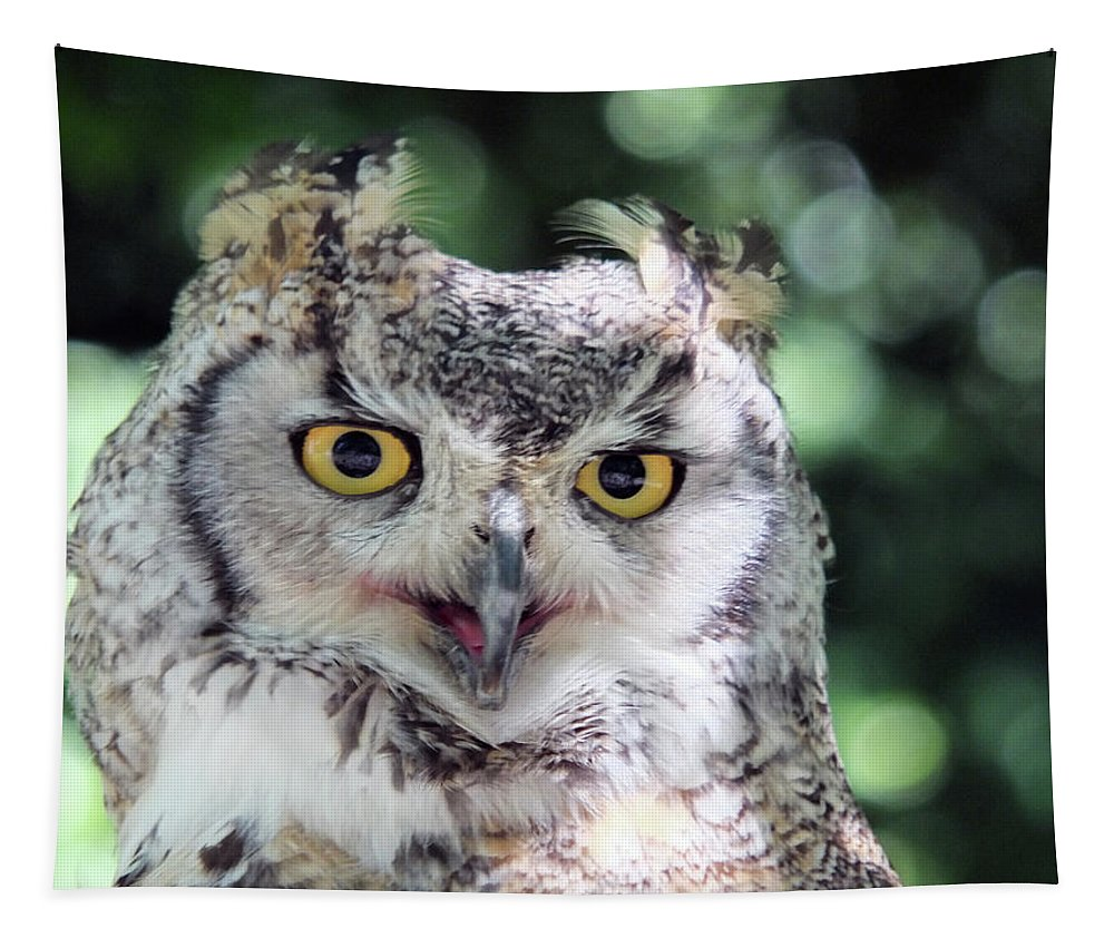 Owl Tapestry featuring the photograph Long Eared Owl In The Trees by Philip Openshaw
