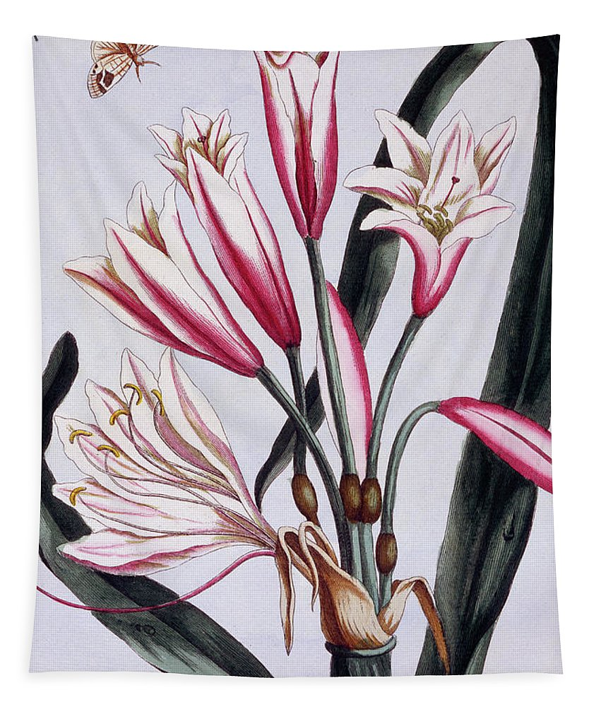 Amaryllis Tapestry featuring the painting Long Leaved Amaryllis by Pierre-Joseph Buchoz