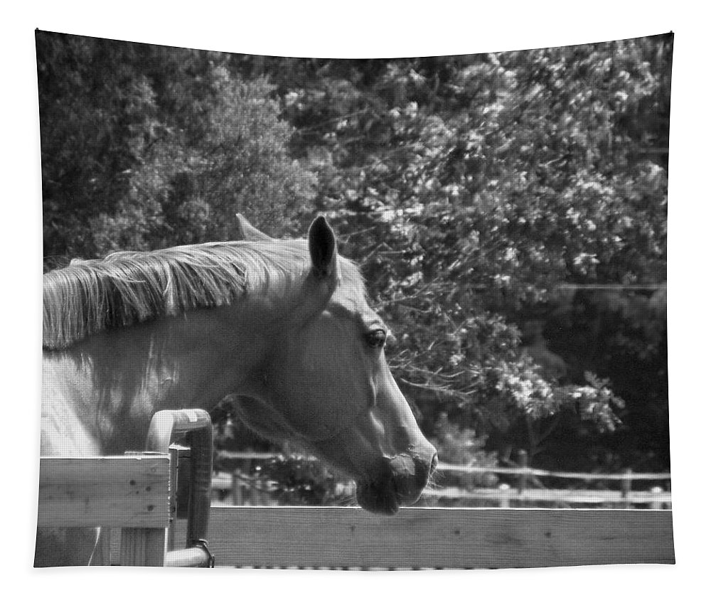 Horse Tapestry featuring the photograph Longing by Sandi OReilly