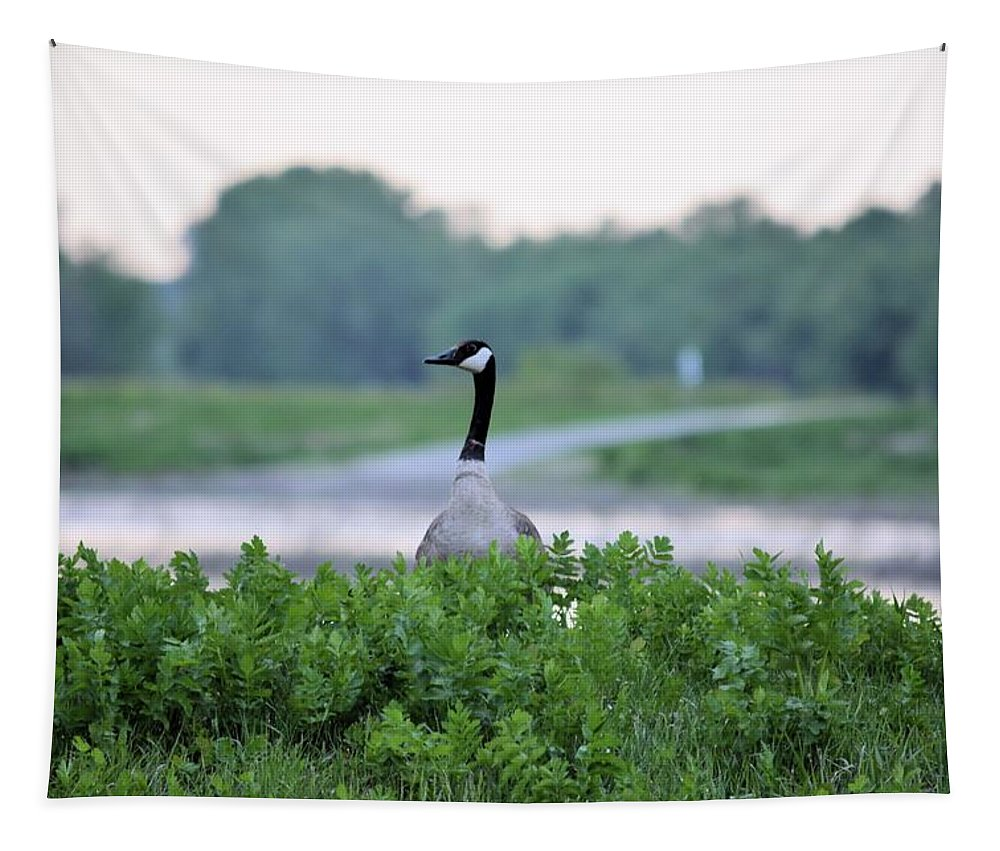 Goose Tapestry featuring the photograph Looking Out by Bonfire Photography