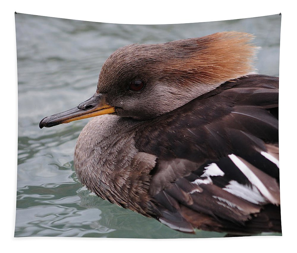 Duck Tapestry featuring the photograph Lophodytes Cucullatus by Mike Martin
