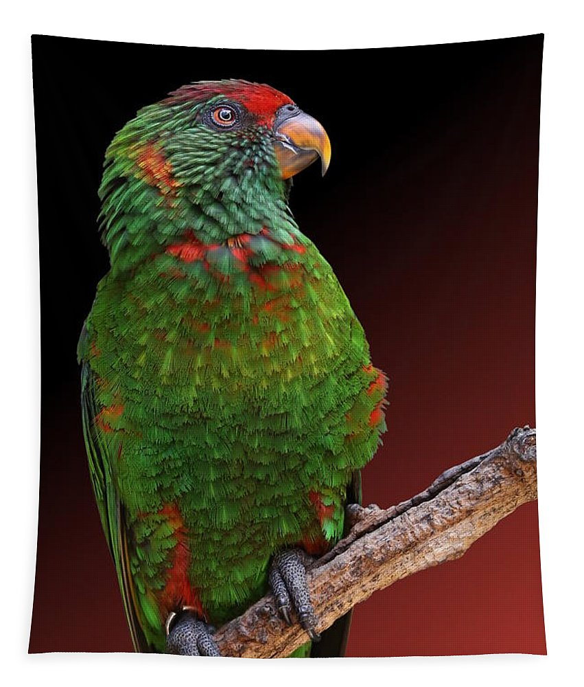 Lorikeet Tapestry featuring the photograph Lorikeet Portrait by Debi Dalio