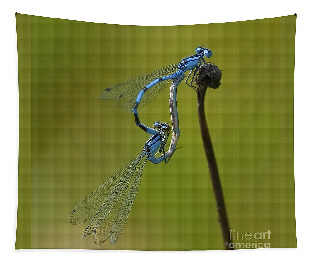 Damselflies Tapestry featuring the photograph Love Dance.. by Nina Stavlund