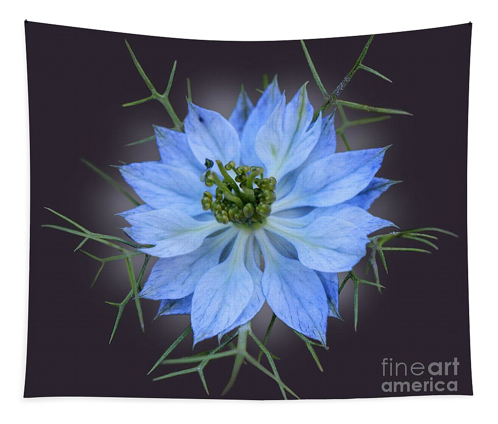 Flower Tapestry featuring the photograph Love In A Mist Black With Light by Karen Adams
