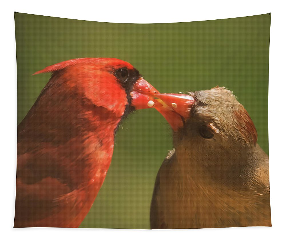 Love Is In The Air Cardinals Square Tapestry featuring the photograph Love Is In The Air Cardinals Square by Terry DeLuco