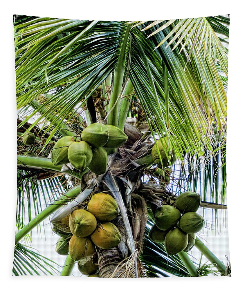 Lovely Bunch Of Coconuts Tapestry featuring the photograph Lovely Bunch Of Coconuts by Phyllis Taylor