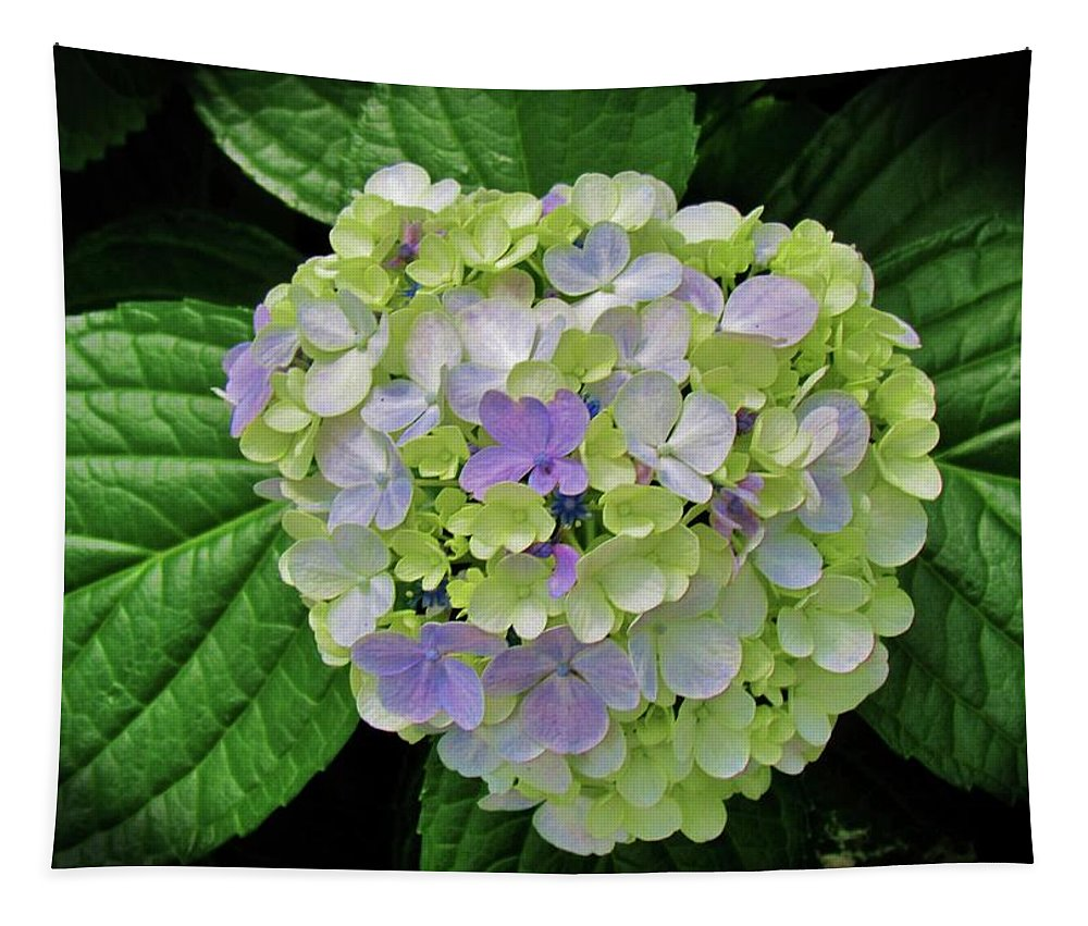 Hydrangea Tapestry featuring the photograph Lovely Hydrangea by Cynthia Guinn