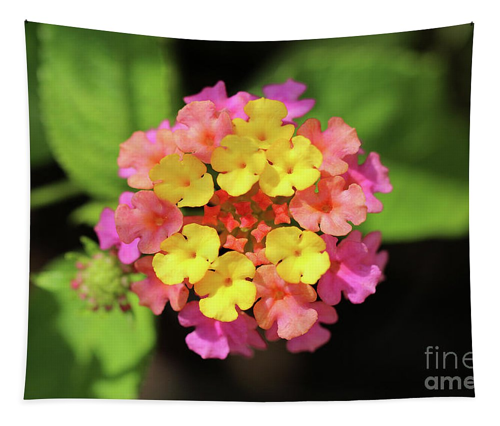 Flower Tapestry featuring the photograph Lovely Lantana by Karen Adams