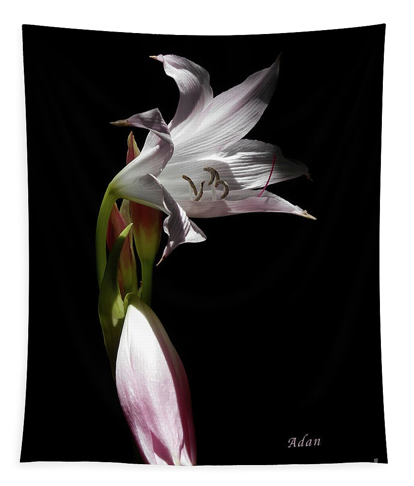 Lily Tapestry featuring the photograph Lovely Lilies Curling Grace by Felipe Adan Lerma