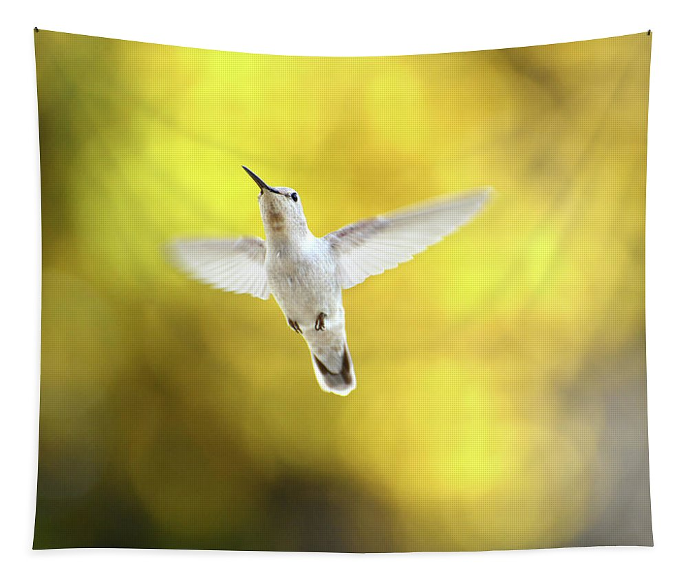 Hummingbird Tapestry featuring the photograph Luecistic Hummingbird by Lynn Bauer