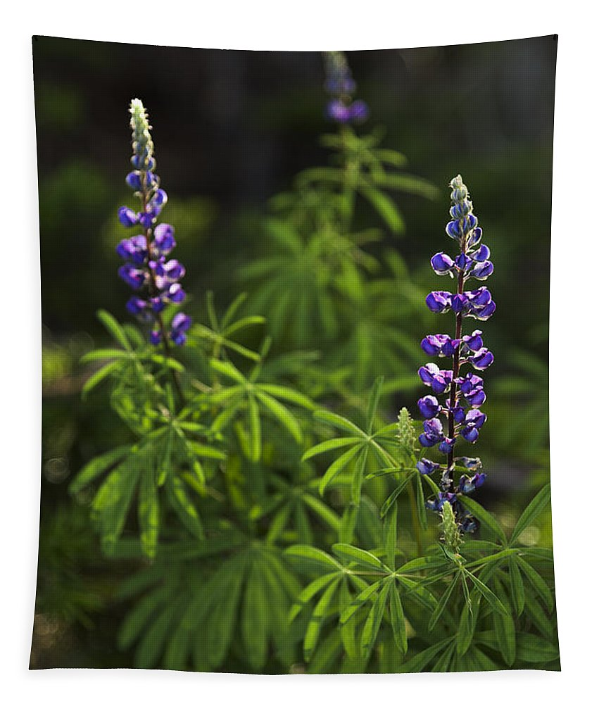 Lupine Tapestry featuring the photograph Lupine by Chad Dutson