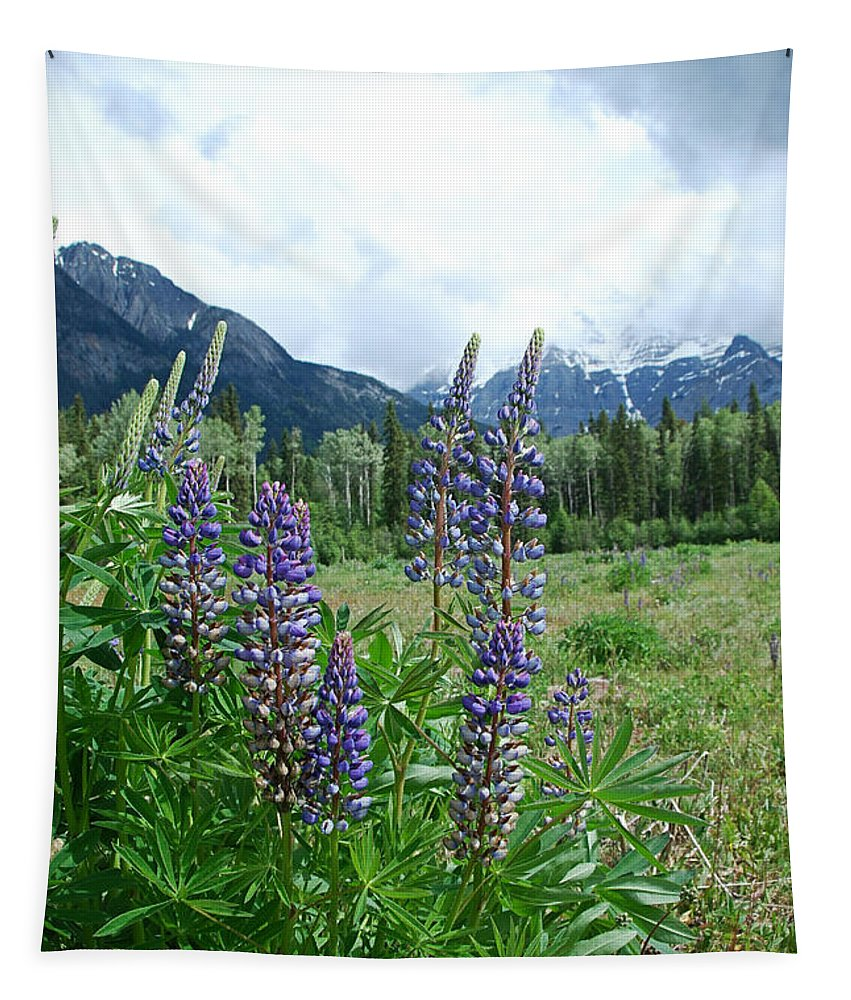 Flower Tapestry featuring the photograph Lupine In The Alpine by Katherine Nutt