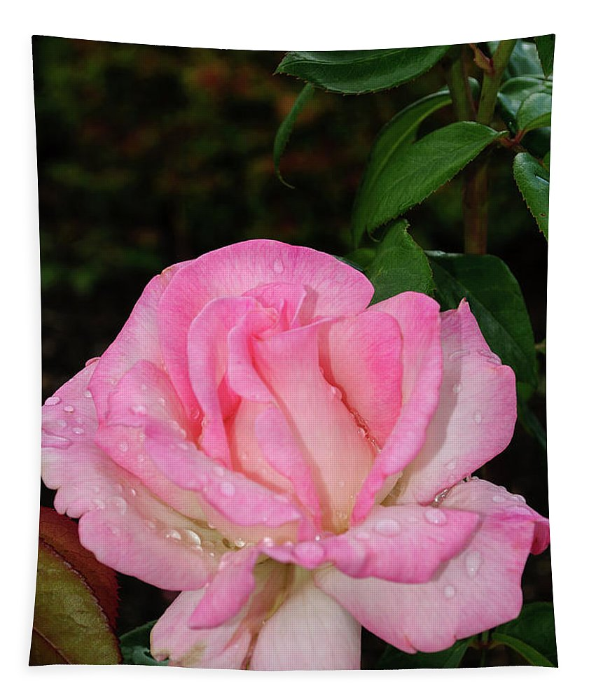 Lustrous Pink Rose Tapestry featuring the photograph Lustrous Pink Rose by Tikvah's Hope