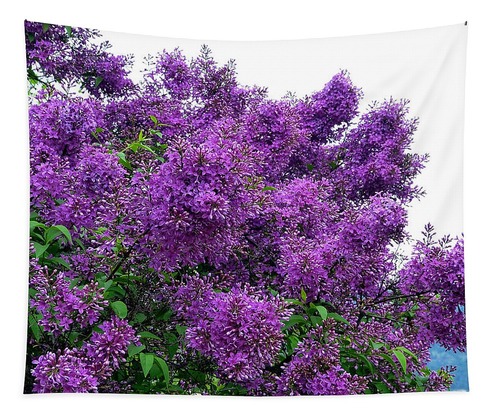 #luxuriouslilacs Tapestry featuring the photograph Luxurious Lilacs by Will Borden