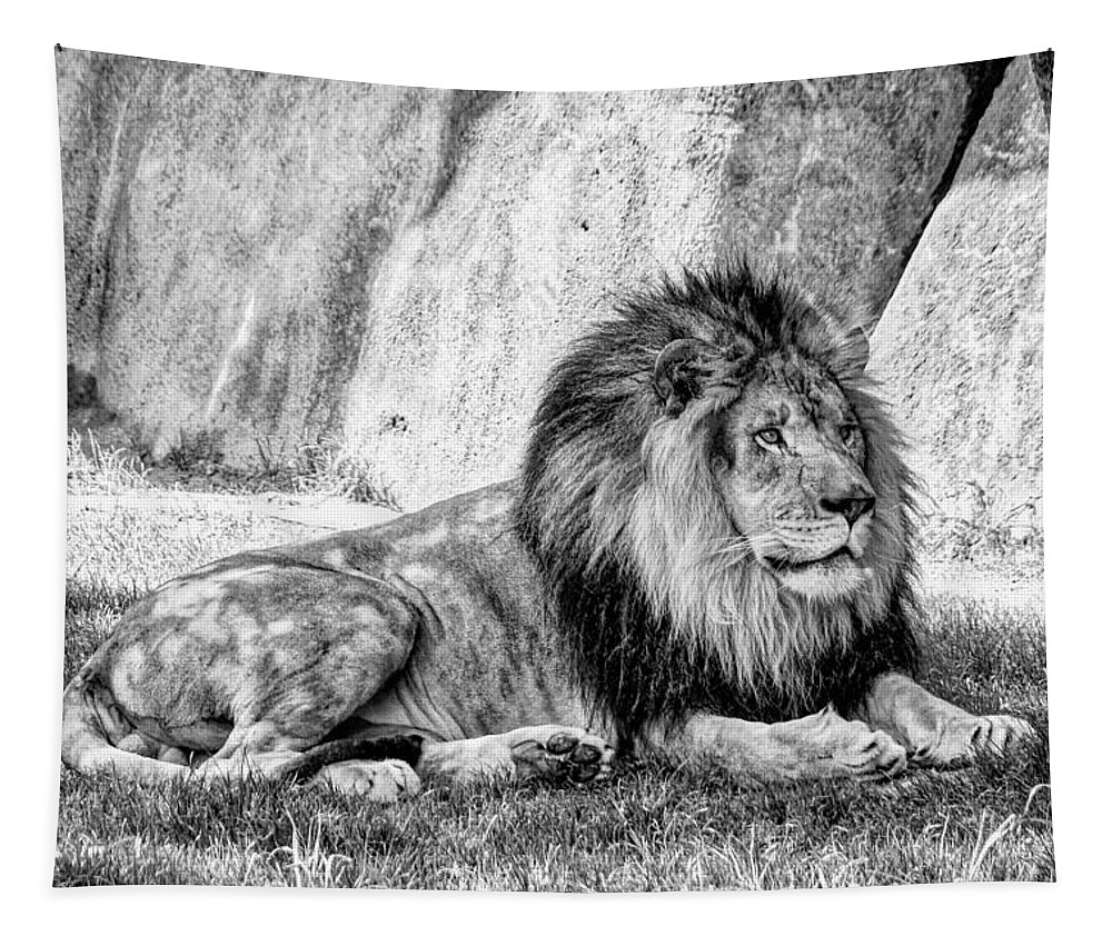 African Cats Tapestry featuring the photograph Lyin' In The Shade by Jon Woodhams