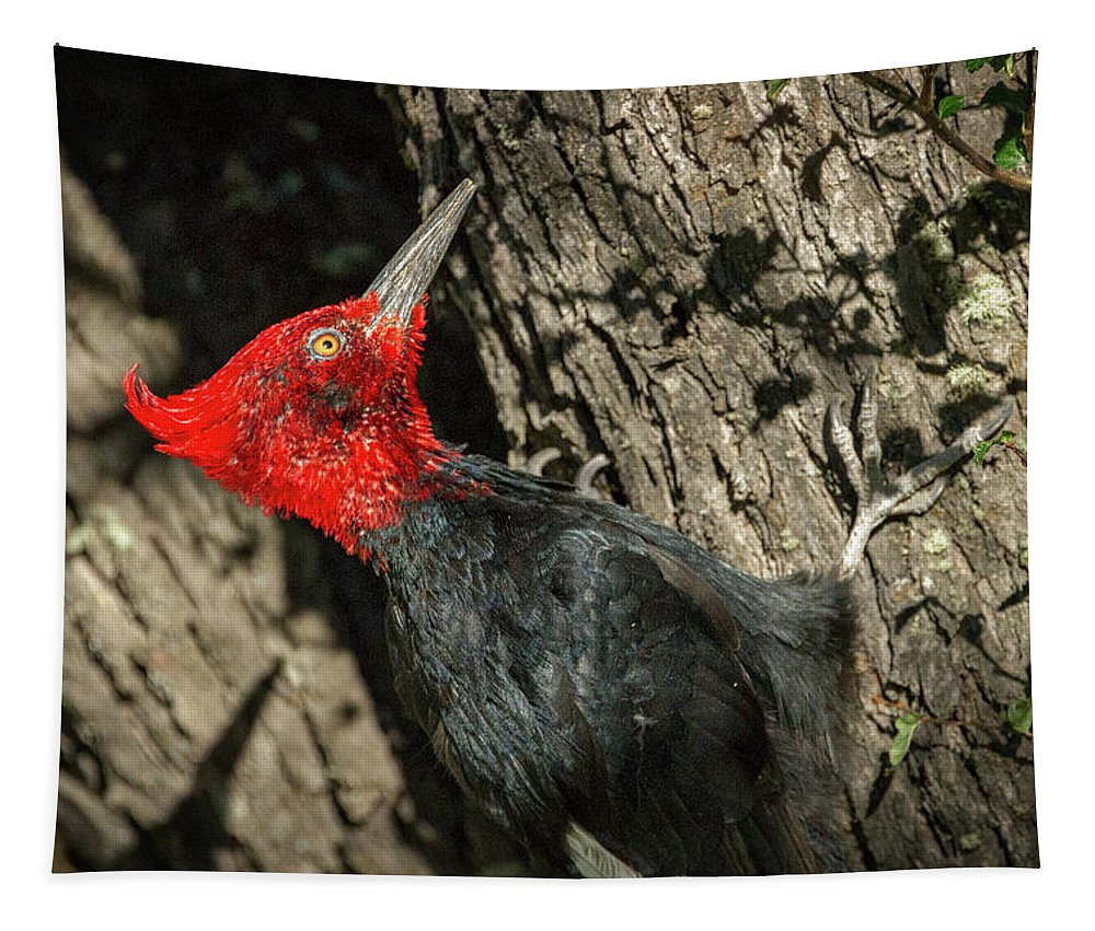 Woodpecker Tapestry featuring the photograph Magellanic Woodpecker - Patagonia by Stuart Litoff